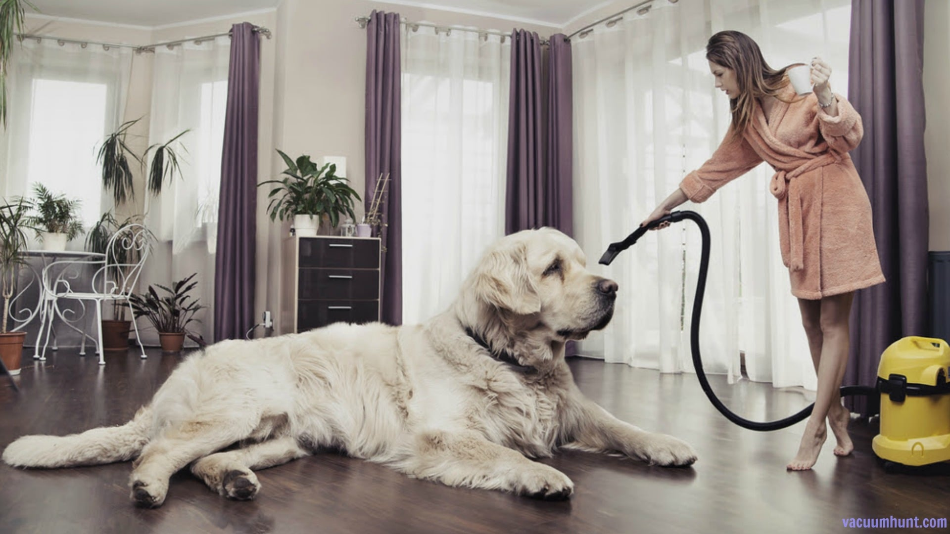 Best Vacuum for Pet Hair Reviews - A Comprehensive Buying Guide