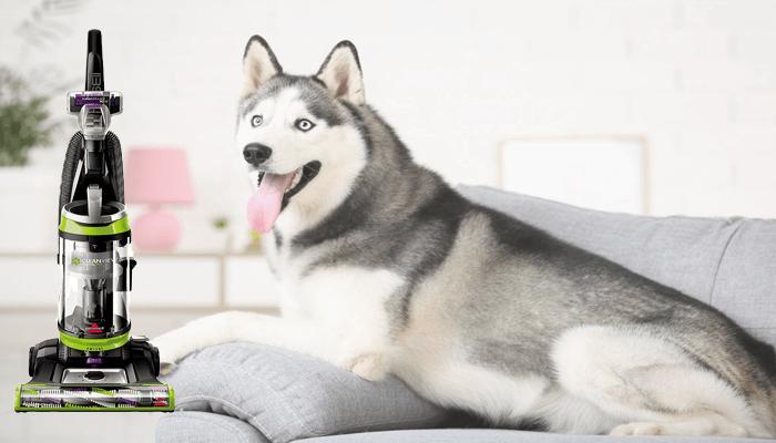 Best Vacuum for Husky Hair