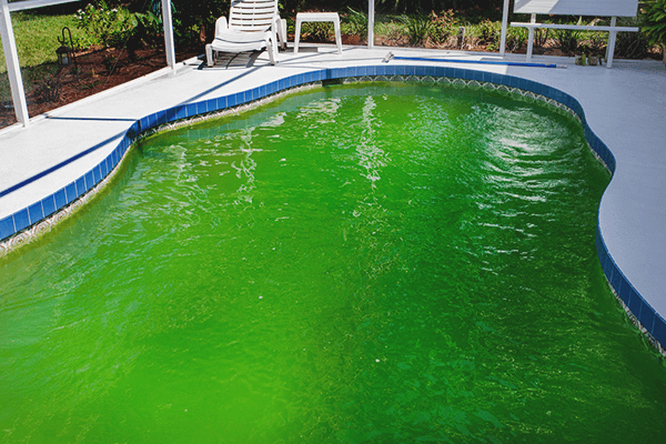 Can you swim in a pool with algae
